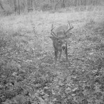 Bucks Gone Wild: Top 7 Tips for Hunting the Rut
