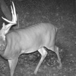 7 Tips for Second Rut Success