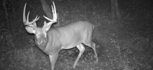 second rut
