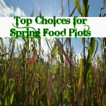 Top Choices for Spring Whitetail Food Plots