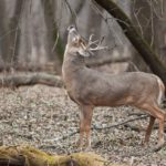 2016 Rut Predictions: Breaking It All Down