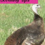 My Top 7 Spring Turkey Scouting Tips