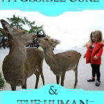 CWD: A Possible Cure and The Human Impact